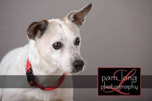 Ellicott City Pet Pictures Photographer 11