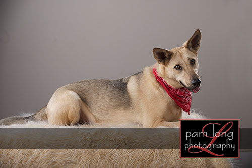 Ellicott City Pet Pictures Photographer 13