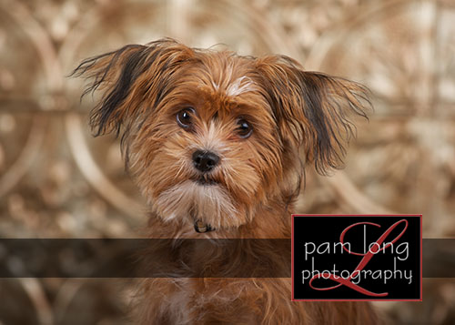 Ellicott City Pet Pictures Photographer 2