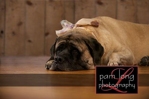 Ellicott City Pet Pictures Photographer 4