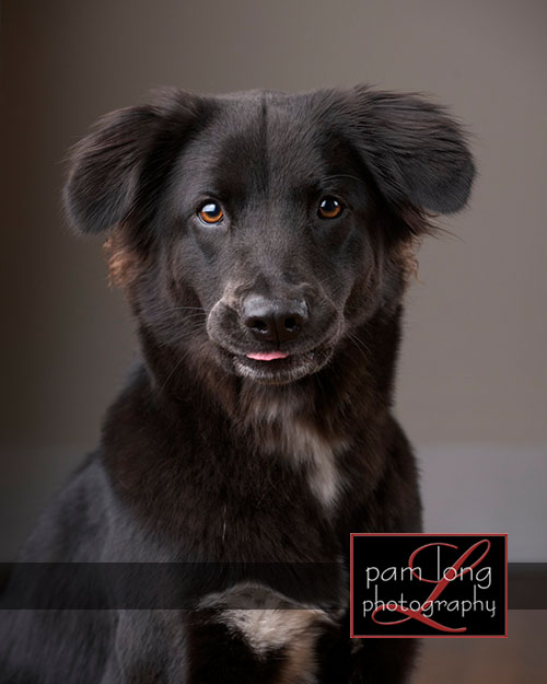 Ellicott City Pet Pictures Photographer 5
