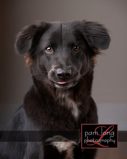 Ellicott City Pet Pictures Photographer 5