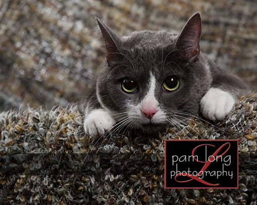 Ellicott City Pet Pictures Photographer 6