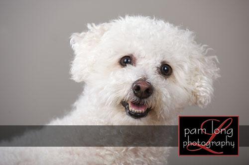 Ellicott City Pet Pictures Photographer 8