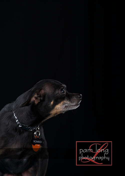 Ellicott City Pet Pictures Photographer 9