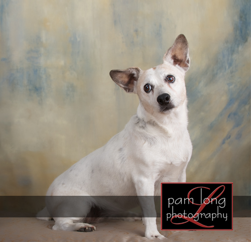Pet photographer Ellicott City