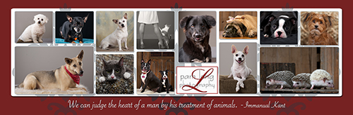 Pet Portraits Howard County photographer