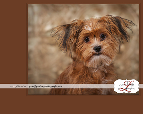 International Award Winning Pet Photographer Howard County